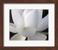 Delicate Lotus V Fine-Art Print