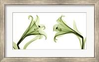 Lilies [Positive] Fine-Art Print
