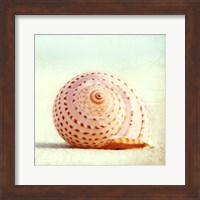 Seashell Voices Fine-Art Print