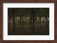 Revitalize - Forest Fine-Art Print