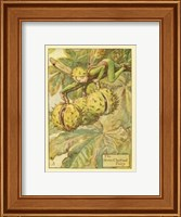 The Horse Chestnut Fairy Fine-Art Print