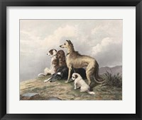 Highland Dogs Fine-Art Print