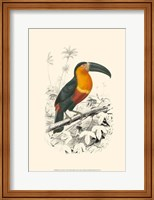 Birds of Costa Rica I Fine-Art Print