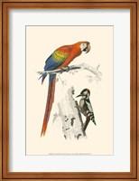 Birds of Costa Rica III Fine-Art Print