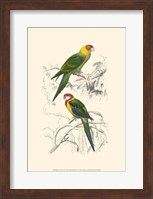 Birds of Costa Rica IV Fine-Art Print