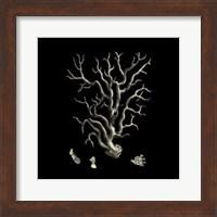 Small Black & Tan Coral I Fine-Art Print