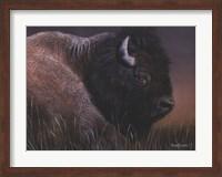 American Icon- Bison Fine-Art Print