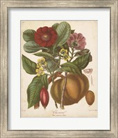 Botanicals I Fine-Art Print