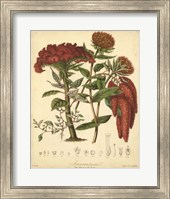Botanicals II Fine-Art Print