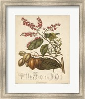 Botanicals IV Fine-Art Print