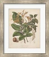 Botanicals VI Fine-Art Print