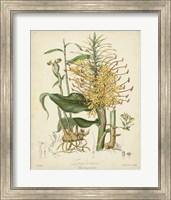 Botanicals VII Fine-Art Print