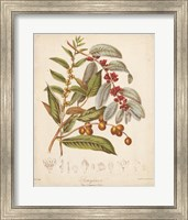 Botanicals VIII Fine-Art Print