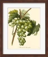Grapes I Fine-Art Print