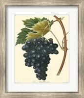 Grapes II Fine-Art Print