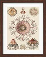Sophisticated Sealife II Fine-Art Print