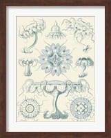 Sophisticated Sealife III Fine-Art Print