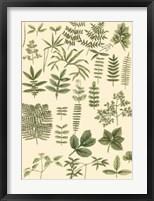 Abundant Foliage II Fine-Art Print