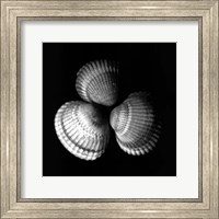 Shell Collection I Fine-Art Print