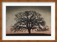 Majestic Oak Fine-Art Print