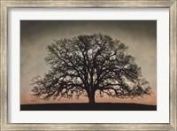 Majestic Oak Fine-Art Print