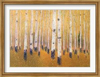 A Portrait Of Aspens Fine-Art Print