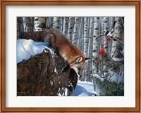 Fox in Winter Fine-Art Print
