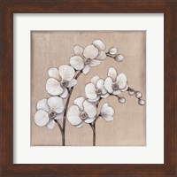 White Orchid II Fine-Art Print