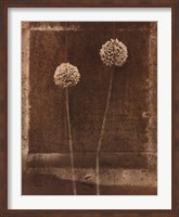 Queen Anne's Lace Fine-Art Print