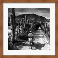 Bodega Tacuil Fine-Art Print