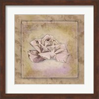 Rose Square II Fine-Art Print