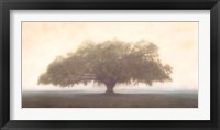 Oak in the Fog Fine-Art Print