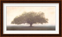 Oak in the Fog Fine-Art Print