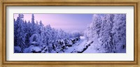 Snow covered trees in a forest, Imatra, Finland Fine-Art Print