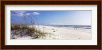 Tall grass on the beach, Perdido Key Area, Gulf Islands National Seashore, Pensacola, Florida, USA Fine-Art Print