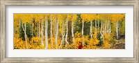 Aspen Trees in Autumn, Dixie National Forest, Utah Fine-Art Print