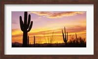 Sunset Saguaro Cactus Saguaro National Park AZ Fine-Art Print