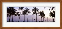Palm trees on the beach, Waikiki, Honolulu, Oahu, Hawaii (black and white) Fine-Art Print