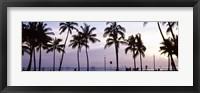 Palm trees on the beach, Waikiki, Honolulu, Oahu, Hawaii (black and white) Fine-Art Print