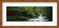 River flowing in the forest, Aberfeldy, Perthshire, Scotland Fine-Art Print