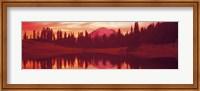 Reflection of trees in water, Tipsoo Lake, Mt Rainier, Mt Rainier National Park, Washington State, USA Fine-Art Print