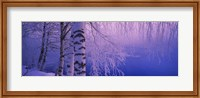 Birch tree at a riverside, Vuoksi River, Imatra, Finland Fine-Art Print