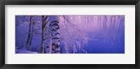 Birch tree at a riverside, Vuoksi River, Imatra, Finland Fine-Art Print