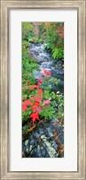 River flowing through a forest, Black River, Upper Peninsula, Michigan (vertical) Fine-Art Print