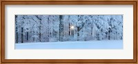 Forest in winter at sunrise, Swabian Alb, Baden-Wurttemberg, Germany Fine-Art Print