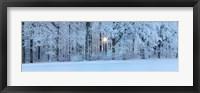 Forest in winter at sunrise, Swabian Alb, Baden-Wurttemberg, Germany Fine-Art Print