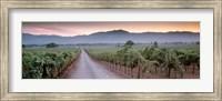 Road in a vineyard, Napa Valley, California, USA Fine-Art Print