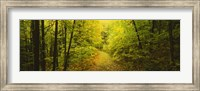 Dirt road passing through a forest, Vermont, USA Fine-Art Print