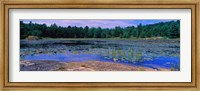 Pond in a national park, Bubble Pond, Acadia National Park, Mount Desert Island, Hancock County, Maine, USA Fine-Art Print