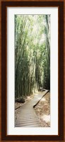 Trail in a bamboo forest, Hana Coast, Maui, Hawaii, USA Fine-Art Print